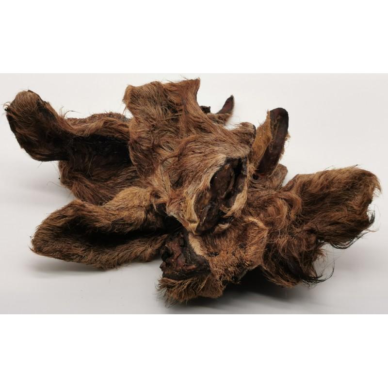 Oreille de chameau friandise naturelle chien
