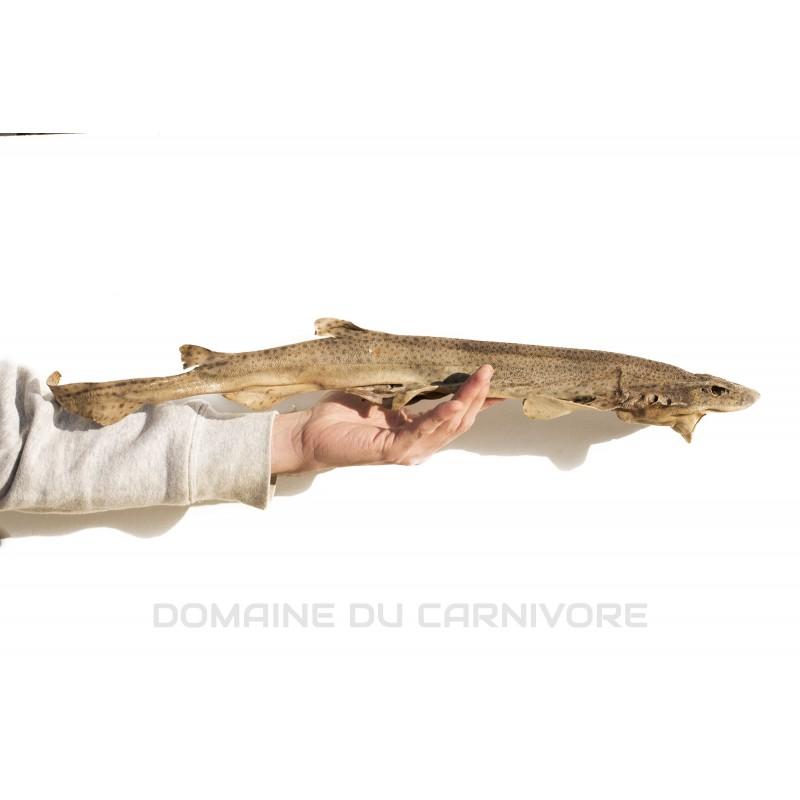 Roussette (mini requin) séchée Friandise naturelle chien