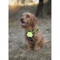 Harnais Arka Dog multisport Vert Citron pour chien
