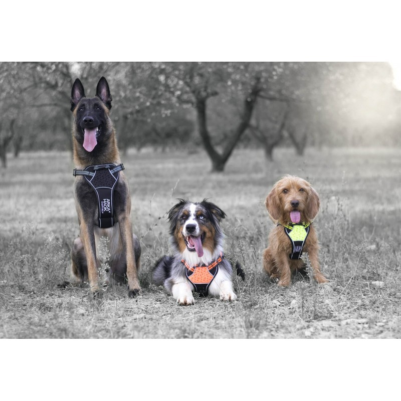 Harnais Arka Dog multisport Orange Martin Sellier pour chien